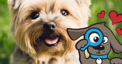 Tinki.nl goedkope hondenspeeltjes